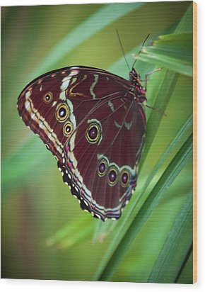 Wood Print featuring the photograph Majesty Of Nature by Karen Wiles