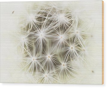 Make A Wish Wood Print by Marlo Horne
