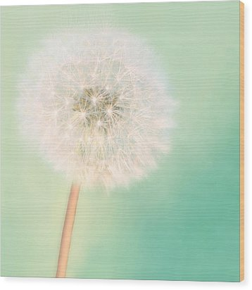 Wood Print featuring the photograph Make A Wish - Square Version by Amy Tyler