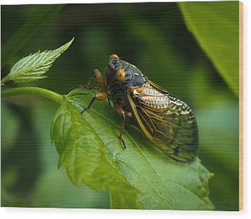 Wood Print featuring the photograph Making Eye Contact by Monte Stevens