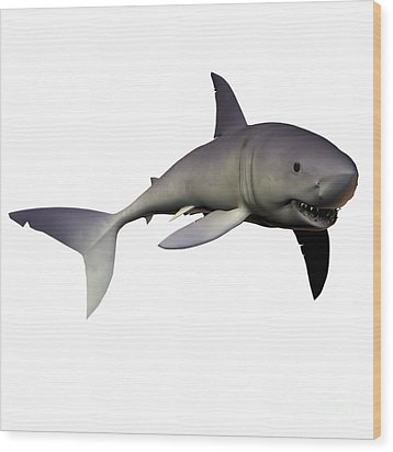 Mako Shark Wood Print by Corey Ford
