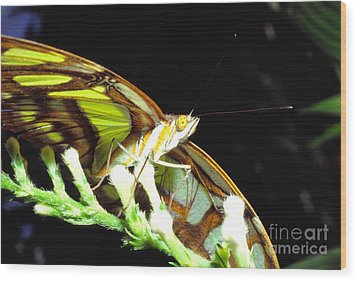 Malachite Butterfly Wood Print by Thomas R Fletcher