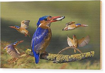 Malachite Kingfisher Collage Wood Print by Basie Van Zyl