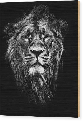 Male Asiatic Lion Wood Print by Meirion Matthias
