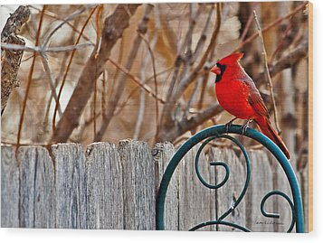 Male Cardinal Wood Print by Edward Peterson