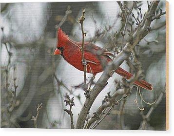 Male Cardinal Wood Print by Gregory Scott