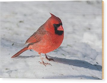 Male Cardinal In Winter Wood Print by Kenneth Cole