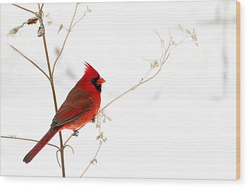 Male Cardinal Posing In The Snow Wood Print