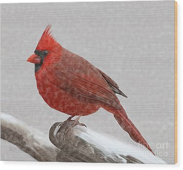 Male Cardinal In Snow Wood Print by Rand Herron