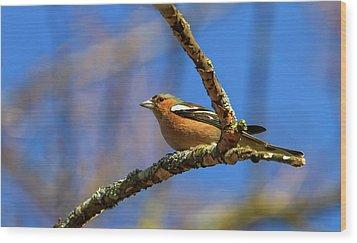 Male Common Chaffinch Bird, Fringilla Coelebs Wood Print by Elenarts - Elena Duvernay photo