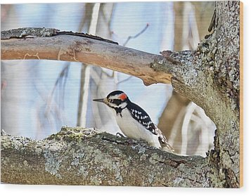 Wood Print featuring the photograph Male Downey Woodpecker 1112 by Michael Peychich