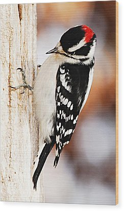 Male Downy Woodpecker 3 Wood Print by Larry Ricker