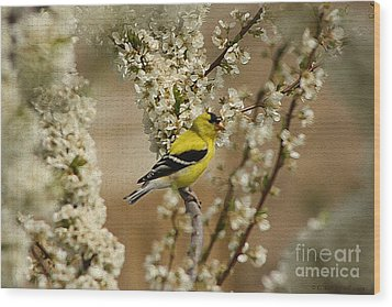 Male Finch In Blossoms Wood Print by Cathy  Beharriell