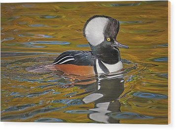 Wood Print featuring the photograph Male Hooded Merganser Duck by Susan Candelario