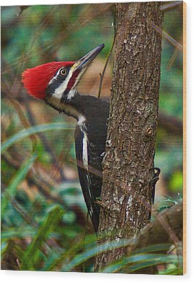 Male Pileated Woodpecker Wood Print
