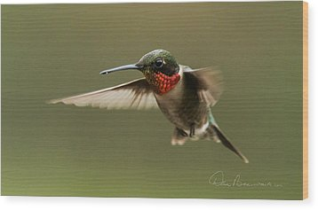 Male Ruby-throated Hummingbird 6794 Wood Print by Dan Beauvais