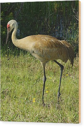 Wood Print featuring the photograph Male Sandhill Crane by Lynda Dawson-Youngclaus