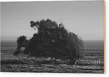 Wood Print featuring the photograph Malformed Treeline by Clayton Bruster