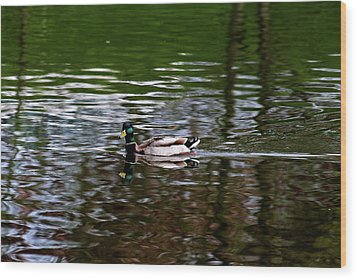Mallard Wood Print by Bonnie Bruno