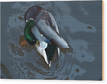 Mallard  Wood Print by Don  Wright
