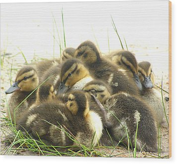 Wood Print featuring the photograph Mallard Ducklings by Angie Rea