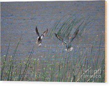 Wood Print featuring the photograph Mallard Ducks - Nelson Resevior White Mountains by Donna Greene