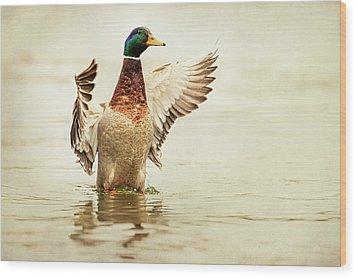 Mallard Wood Print by Everet Regal