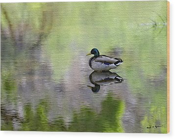 Wood Print featuring the photograph Mallard In Mountain Water by Mark Myhaver
