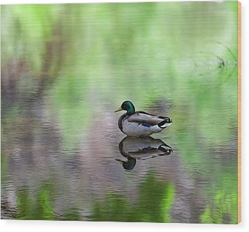 Wood Print featuring the photograph Mallard In Reflecting Pool H58 by Mark Myhaver