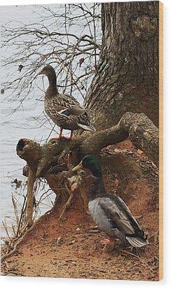 Wood Print featuring the photograph Mallard by Kim Henderson