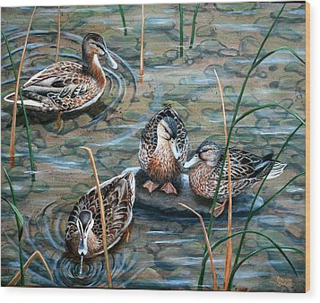 Mallards Wood Print by Brenda Baker