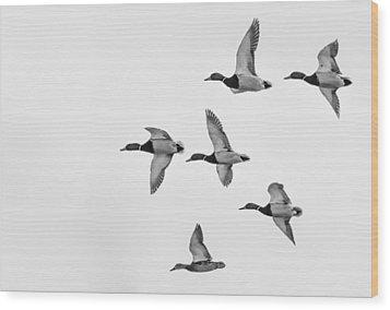 Mallards Wood Print by Dan Traun