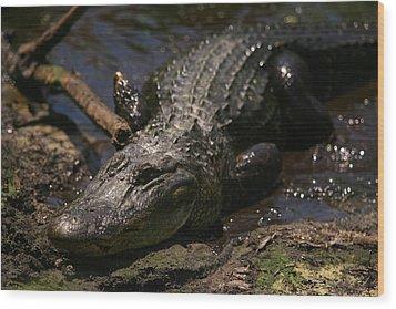 Mama Gator Wood Print by James Jones