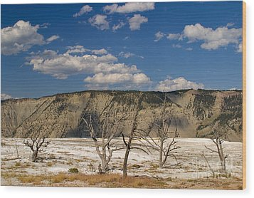 Wood Print featuring the photograph Mammoth Springs Sentinels by Charles Kozierok