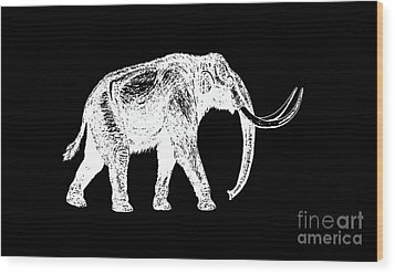 Mammoth White Ink Tee Wood Print by Edward Fielding
