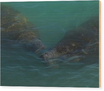 Wood Print featuring the photograph Manatees Head For Air by Lynda Dawson-Youngclaus