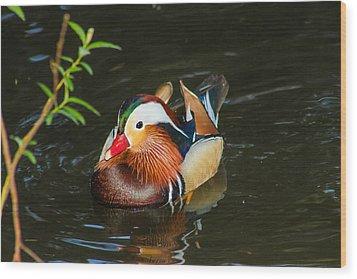 Mandarin 3 Wood Print