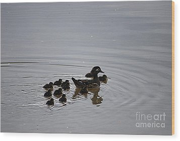 Mandarin Duck And Babes 20130508_227 Wood Print