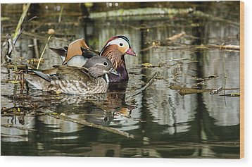 Mandarin Ducks The Couple Wood Print by Torbjorn Swenelius