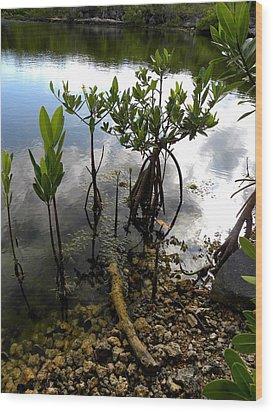 Mangrove 2 Wood Print by Patricia Bigelow