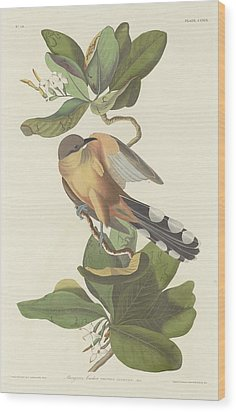 Mangrove Cuckoo Wood Print by Rob Dreyer