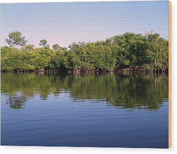 Mangrove Forest Wood Print by Steven Scott