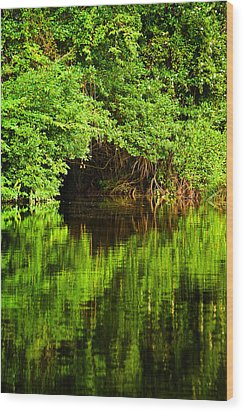 Mangrove Tunnel Wood Print by Sarita Rampersad