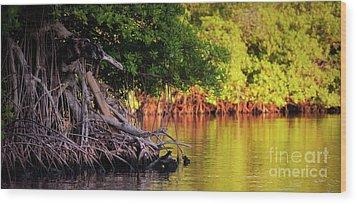 Mangroves Of Roatan Wood Print by Doug Sturgess