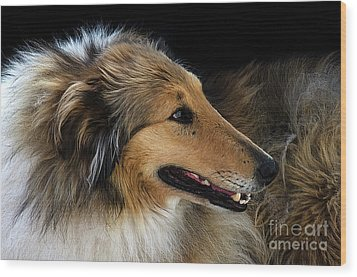Wood Print featuring the photograph Man's Best Friend by Bob Christopher