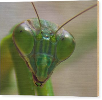 Mantis Face Wood Print