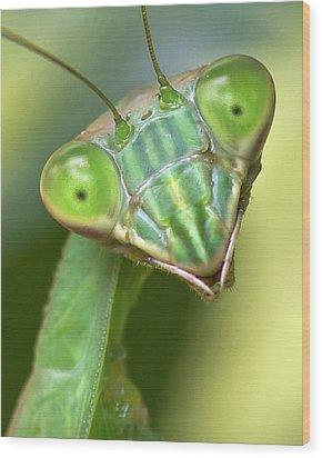 Mantis Hello Wood Print by Alan Raasch