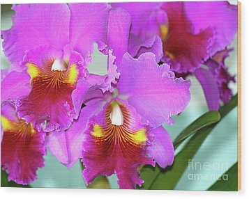 Many Purple Orchids Wood Print