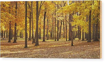 Wood Print featuring the photograph Maple Glory by Francesa Miller