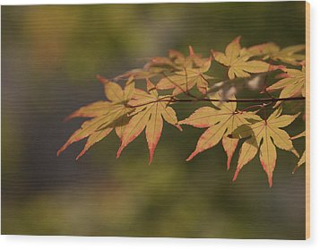 Maple Wood Print